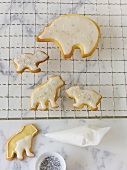 Iced polar bear biscuits