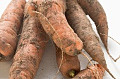 Dirty carrots (close-up)