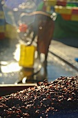 Pomace from the wine press, St. Triphon, Switzerland