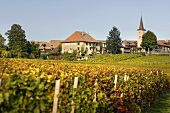 Wine-growing village of Lavigny, Appelation Morges, Switzerland