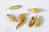 Six-rowed barley (Hordeum vulgare ssp, hexastichon)
