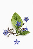 Borage leaves and flowers