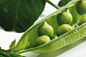 Fresh peas in an opened pea pod