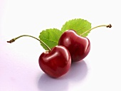 Two cherries with leaves