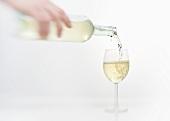 Weisswein wird in ein Weinglas eingeschenkt