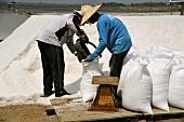 Putting freshly extracted sea salt into sacks