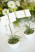 Two place cards in small flowerpots