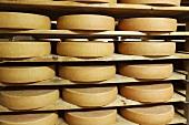Bergkäse cheese (Alpine cheese) stored on wooden shelves