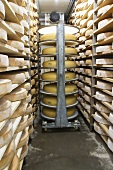 Emmental & Bergkäse cheese (Alpine cheese) in ripening room