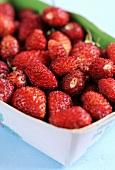 Wild strawberries in a cardboard punnet