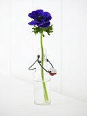 Anemone in a bottle