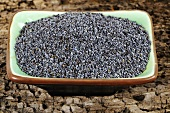 Opium poppy seeds in a dish