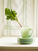 Rhubarb leaf in a cup on a pile of plates