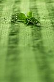 Fresh basil on green fabric