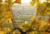 Blick durch die Reben auf den Weinort Hainfeld, Pfalz, Deutschland