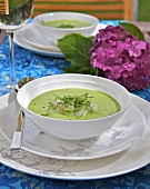 Cold pea soup with scallops