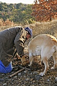 Man truffle hunting with dog (France)