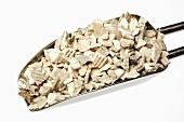 Ark shells in a scoop