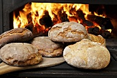 Wood-oven bread in front of fire in oven