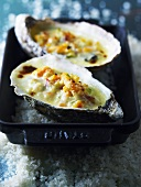 Two oysters au gratin
