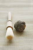 Black truffle (Périgord truffle) with brush
