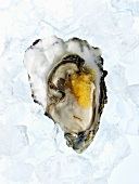 Oyster with caviar on ice