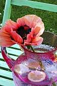 A poppy in a jug of water