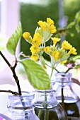 Cowslips in three glass bottles