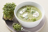 Cream of vegetable soup with herbs