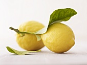 Lemons with stalk and leaf