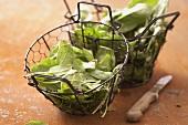 Fresh spinach in wire baskets