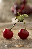 Pair of cherries (Morello cherries)
