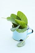 Sage leaves in a mug