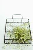 Lemon thyme in a wire basket