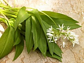 Ramsons (wild garlic) leaves and flower