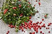 Fresh cranberries with cranberry twigs