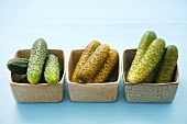 Raw pickling cucumbers, mild and strong pickled gherkins