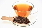 Tee aus der Wurzel der Tartarenaster (Aster tataricus)