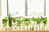 Various herbs in glasses of water on windowsill