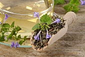 Ground ivy tea with fresh and dried ground ivy