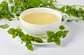 Chickweed tea with flowering chickweed