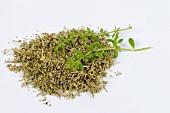 Rupturewort, dried and fresh (Herniaria glabra)