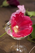 Home-made rose liqueur with hollyhock flowers out of doors