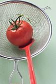 Tomato in sieve