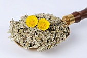 Coltsfoot, dried leaves and flowers (Tussilago farfara)