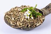 Watercress, dried (Nasturtium officinale) on spoon