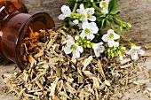 Watercress, dried and fresh (Nasturtium officinale)
