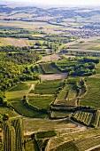 Landscape of vines near Ziersdorf, Weinviertel, Austria