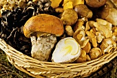 A basket of assorted mushrooms