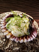 Scallop carpaccio with dill